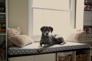 german shorthaired pointer window seat