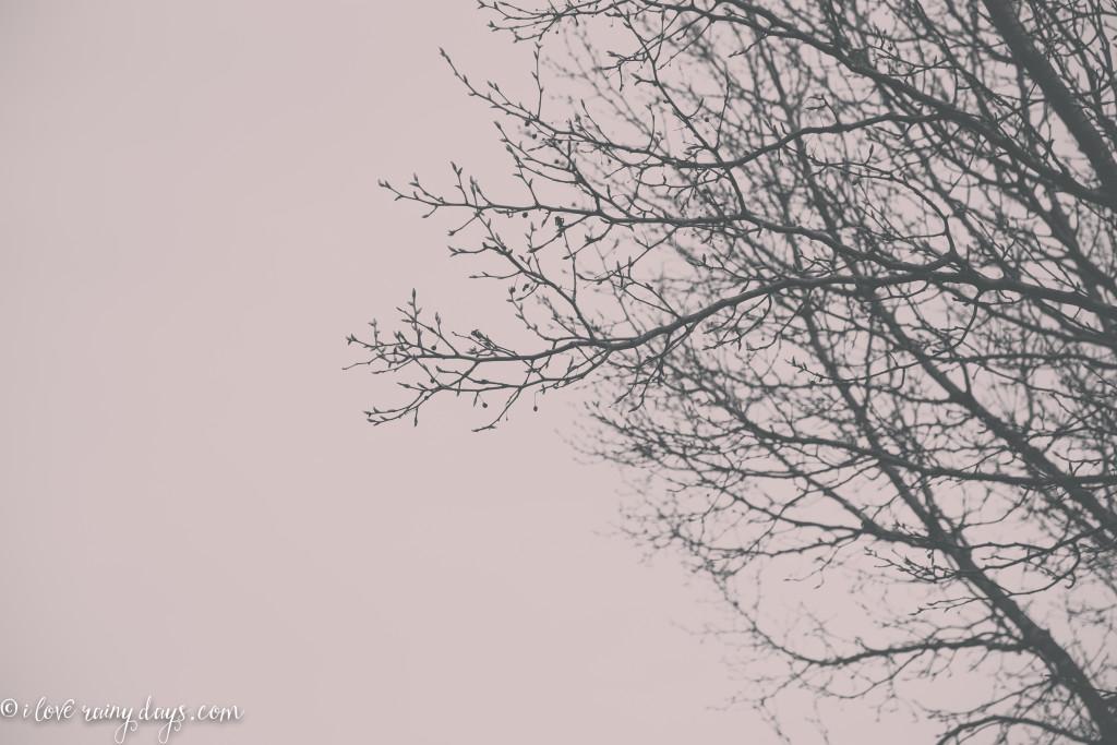 buds against gray skies